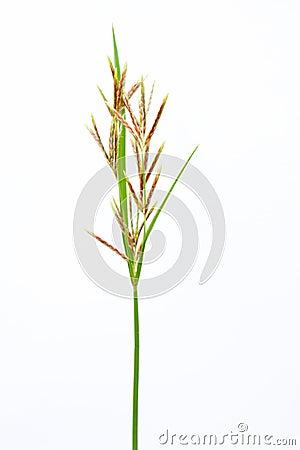 Long grass meadow closeup