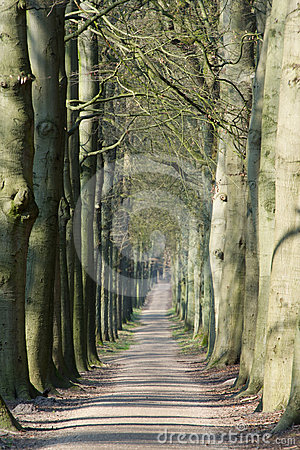 Long lane in forest