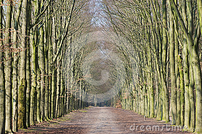 Long Lane In Forest Royalty Free Stock Images - Image: 24565669