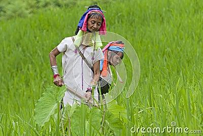 Long Neck Karen working on paddy-field