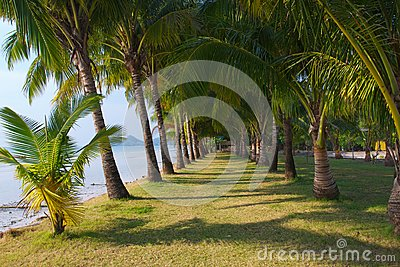 Long palm grove