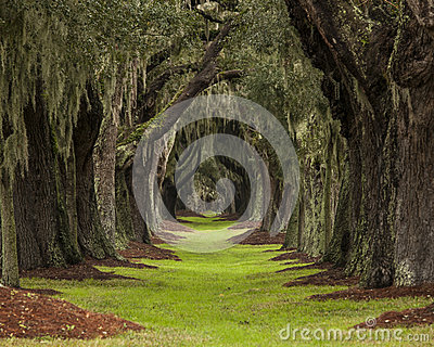 Long path through oaks to unknown destination