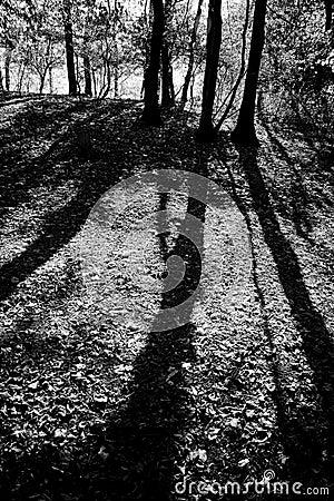 Free Long Shadows Stock Image - 1746661