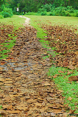 Long stretch of road with dead leaves