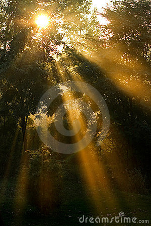 Long sun rays