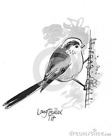 Long Tailed Tit illustration