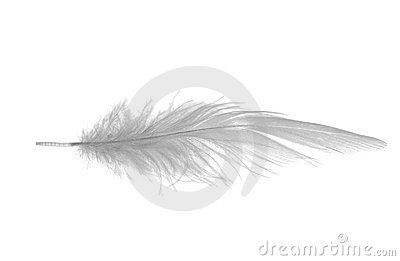 Long white feather