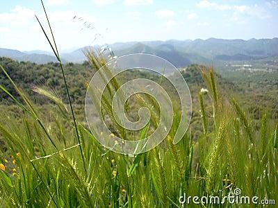 Long Wild Grass