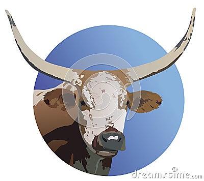 Longhorm Steer