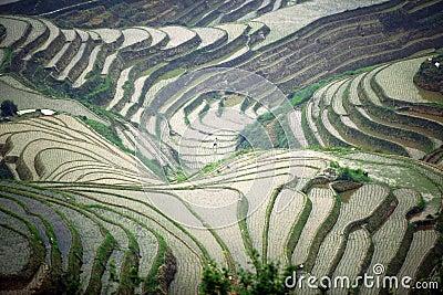 Longji rice terraces, Guangxi province