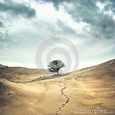 Free Lonley Tree Royalty Free Stock Image - 24749246