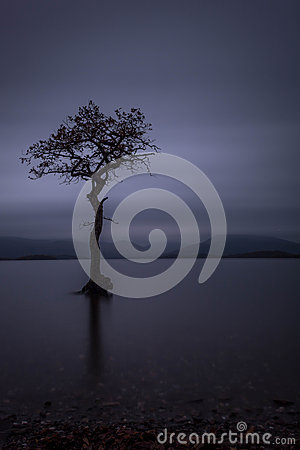 Free Lonley Tree Loch Lomond Scotland Stock Photos - 46359043