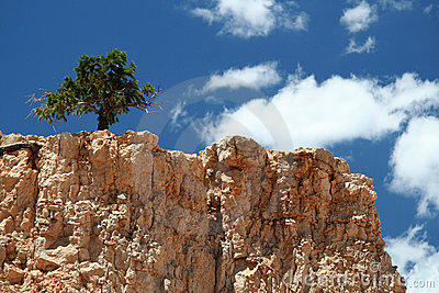 Lonley Tree on Mountain Top