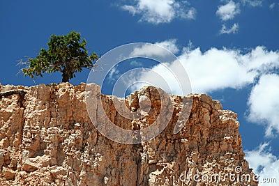 Lonley Tree on Mountain Top