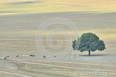 Lonly tree and goats