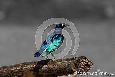 Look of a bird,africa safari