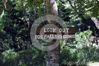 Look out for falling coconuts