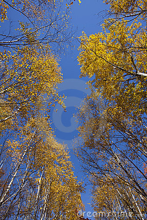 Look up at Fall Colors