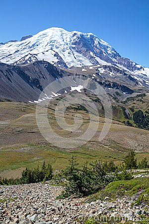 Free Looking Across Alpine Meadows To Mount Rainier From Fremont Trail Stock Image - 100920481