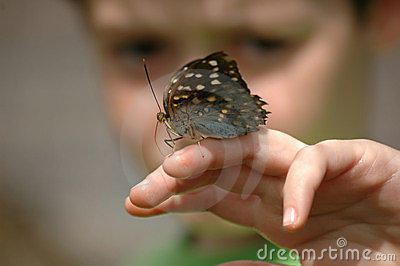 Looking at butterfly