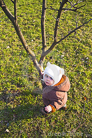 Free Looking Up A Tree Royalty Free Stock Photos - 5171648