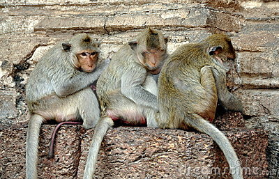 Lop Buri, Thailand: Three Monkeys