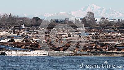 Los argumentos florecientes de la madera enfocan, Columbia Británica 4K UHD almacen de video