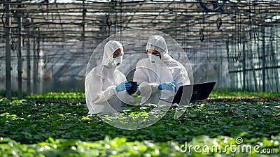 Los biólogos trabajan con un portátil mientras revisan las plantas Científicos que trabajan en el cultivo de alimentos metrajes
