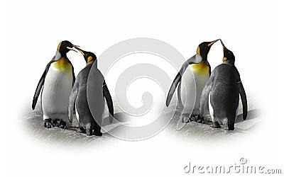 Los pares del pingüino en amor - ligue, bésese, aislado