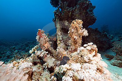 Lost anchor in the Red Sea.