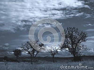 Lost trees...1