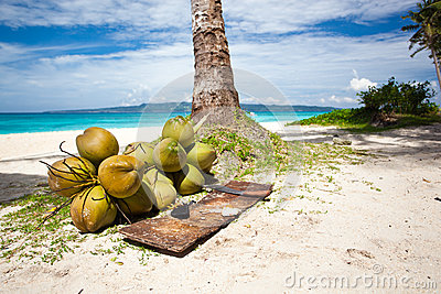 A lot of Coconuts on  beach