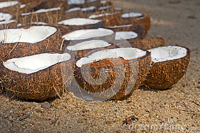 A lot of coconuts