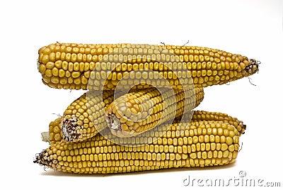 A lot of corncobs.