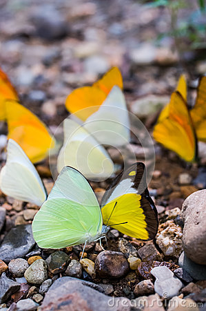 Lot of forest butterfly