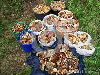 A lot of mushrooms