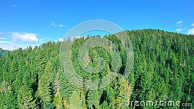 Lot nad wierzchołkami drzewa zbiory wideo