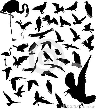 Lot of silhouettes of birds
