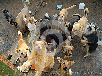 A lot of stray dogs