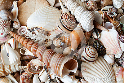 Lots of seashells.