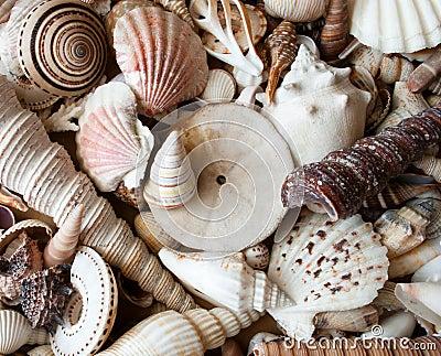 Lots of seashells.