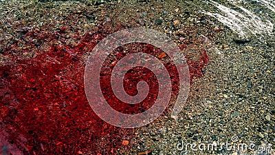 Lotti di sangue che entrano nel fiume stock footage