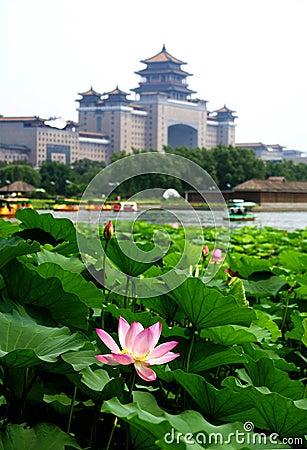 Free Lotus Stock Photo - 5239200