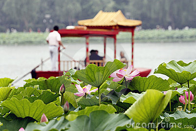 Lotus and boat.