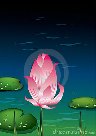 Lotus bud illustration