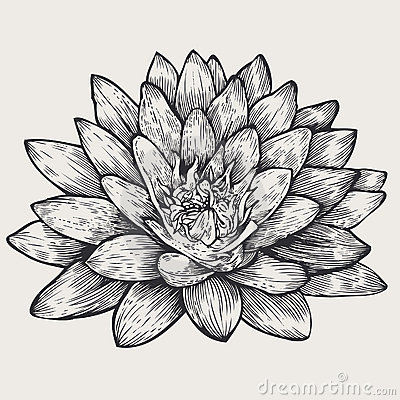 Lotus, floral design element,