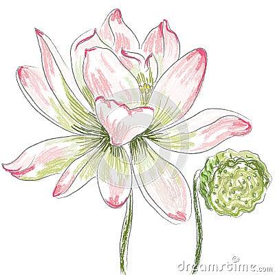 Free Lotus Flower Stock Image - 10782171