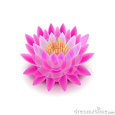 Free Lotus Flower  On White Vector Royalty Free Stock Photo - 67750955