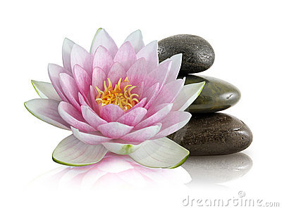 Lotus flower and pebbles