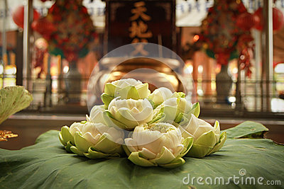 Lotus the flower for pray